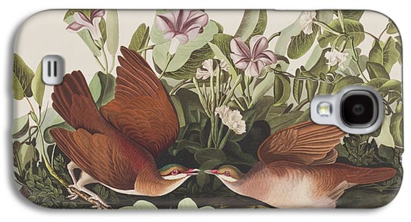 Key West Dove Galaxy S4 Case by John James Audubon