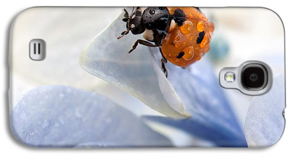 Intense Galaxy S4 Cases - Ladybug Galaxy S4 Case by Nailia Schwarz