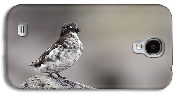 Least Auklet Galaxy S4 Case