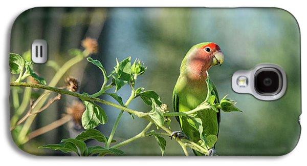 Lovely Little Lovebird  Galaxy S4 Case by Saija Lehtonen
