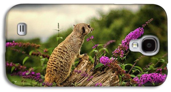 Meerkat Lookout Galaxy S4 Case