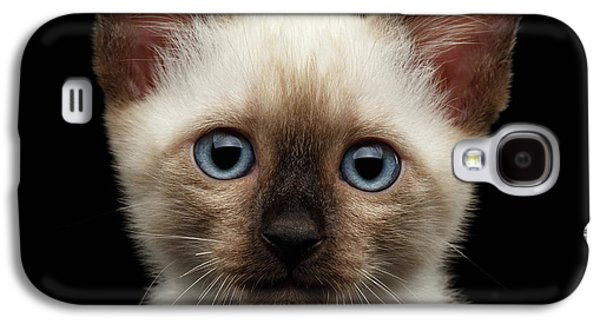 Cat Galaxy S4 Case - Mekong Bobtail Kitty With Blue Eyes On Isolated Black Background by Sergey Taran