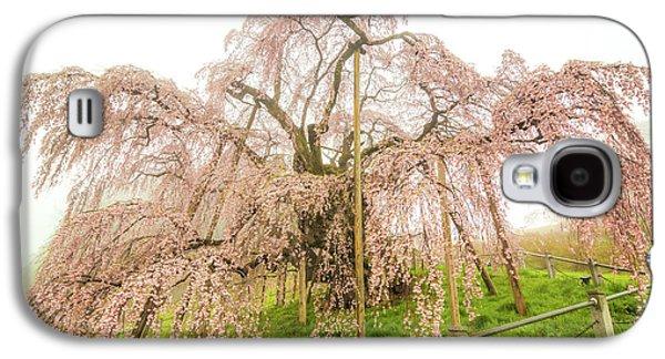 Miharu Takizakura Weeping Cherry02 Galaxy S4 Case by Tatsuya Atarashi