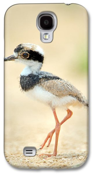 Pied Plover Vanellus Cayanus Chick Galaxy S4 Case by Panoramic Images