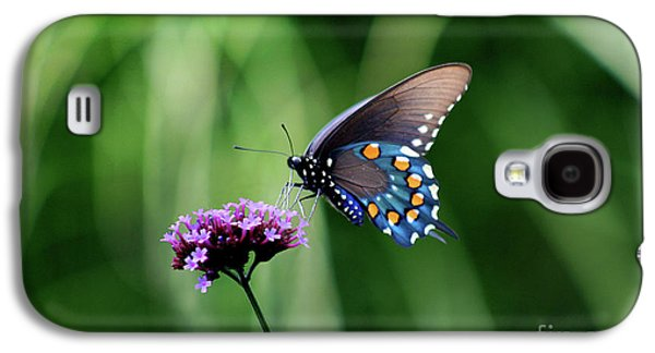 Pipevine Swallowtail Butterfly 2011 Galaxy S4 Case