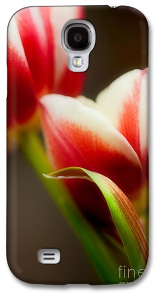 Tulip Galaxy S4 Case - Red And White Tulips by Nailia Schwarz