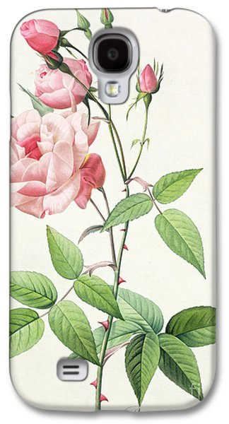 Rosa Indica Vulgaris Galaxy S4 Case