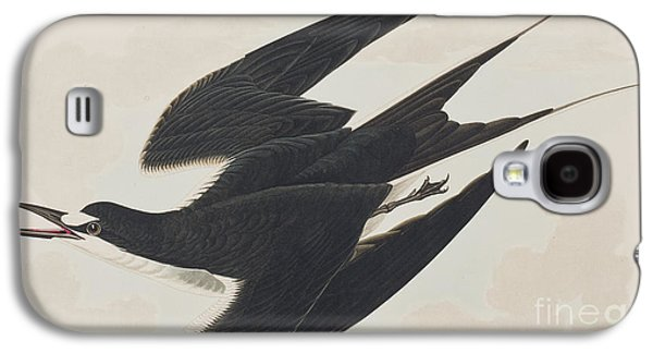 Sooty Tern Galaxy S4 Case by John James Audubon