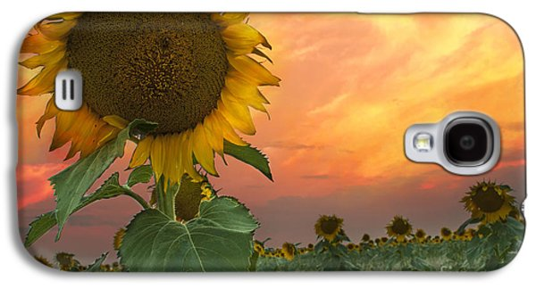 Sunflower Field  Galaxy S4 Case by Juli Scalzi