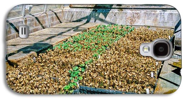 Transgenic Cotton Plants Galaxy S4 Case by Inga Spence