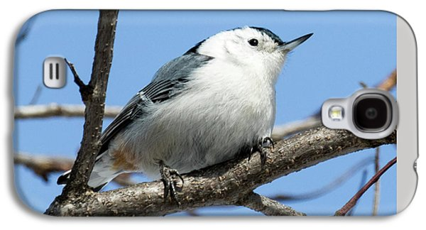 White-breasted Nuthatch Galaxy S4 Case by Ricky L Jones