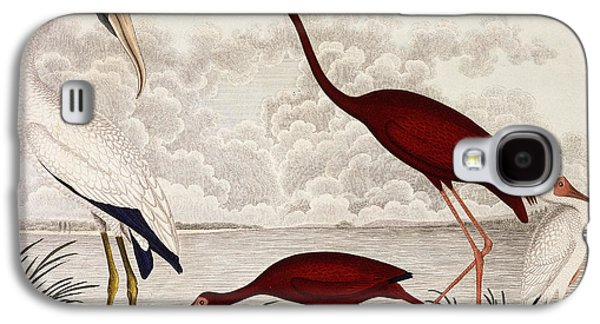 Wood Ibis, Scarlet Flamingo, White Ibis Galaxy S4 Case