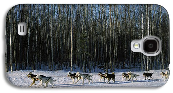 18 Huskies Begin The Long Haul Of 1049 Galaxy S4 Case by Panoramic Images