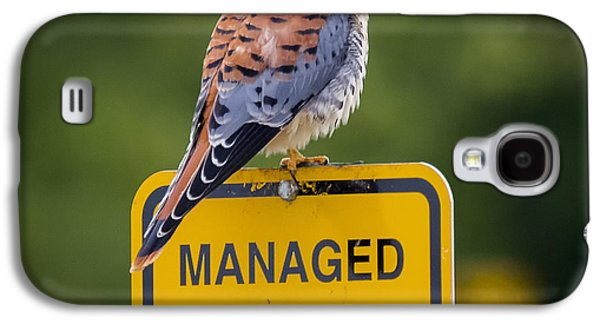 American Kestrel Galaxy S4 Case