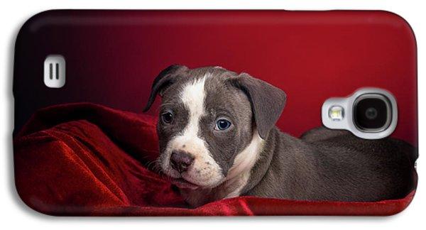 American Pitbull Puppy Galaxy S4 Case
