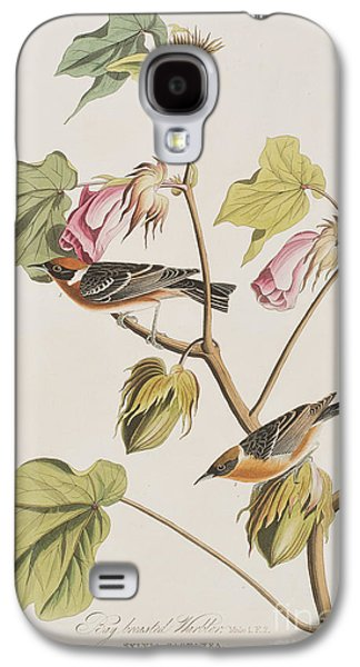 Bay Breasted Warbler Galaxy S4 Case by John James Audubon
