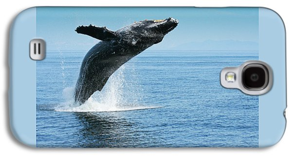 Breaching Humpback Whales Happy-1 Galaxy S4 Case