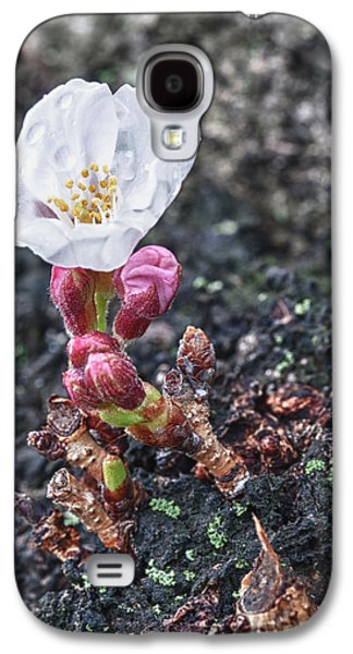 Cherry Blossom Galaxy S4 Case by Sebastian Musial