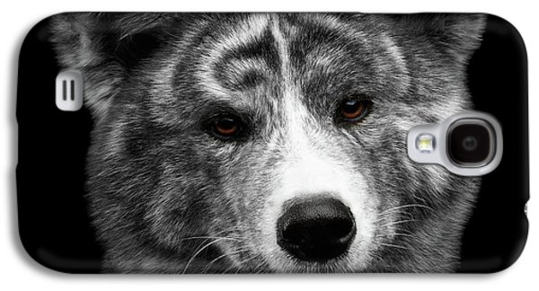 Closeup Portrait Of Akita Inu Dog On Isolated Black Background Galaxy S4 Case