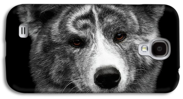 Dog Galaxy S4 Case - Closeup Portrait Of Akita Inu Dog On Isolated Black Background by Sergey Taran