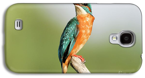 Common Kingfisher Alcedo Atthis Galaxy S4 Case