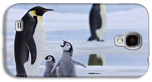 Emperor Penguins And Chicks Galaxy S4 Case by Jean-Louis Klein & Marie-Luce Hubert