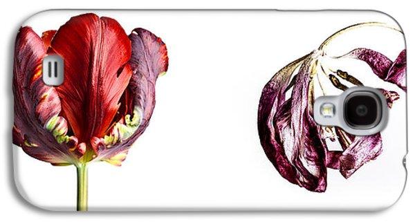 Tulip Galaxy S4 Case - Fading Beauty by Nailia Schwarz