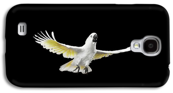 Flying Crested Cockatoo Alba, Umbrella, Indonesia, Isolated On Black Background Galaxy S4 Case