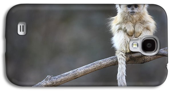 Golden Snub-nosed Monkey Rhinopithecus Galaxy S4 Case by Cyril Ruoso