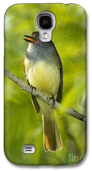 Great Crested Flycatcher Galaxy S4 Case by Anthony Mercieca