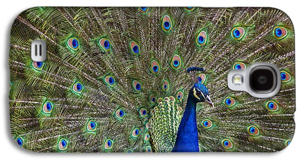 Indian Peafowl Male With Tail Fanned Galaxy S4 Case