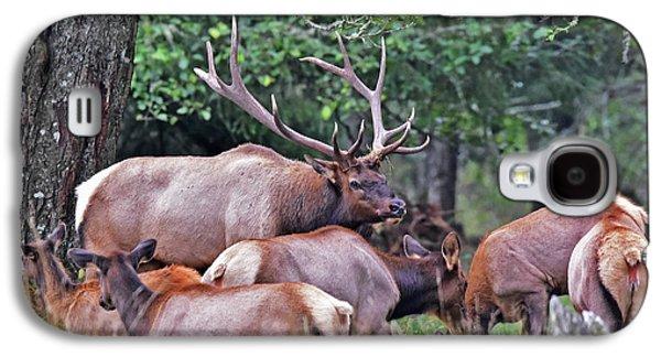 Royal Roosevelt Bull Elk Galaxy S4 Case