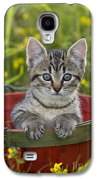 Tabby Kitten Galaxy S4 Case