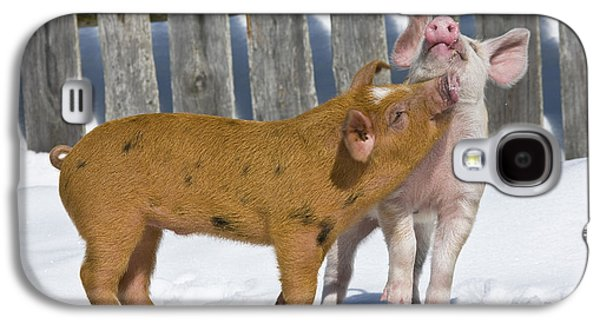 Two Piglets Playing Galaxy S4 Case by Jean-Louis Klein and Marie-Luce Hubert