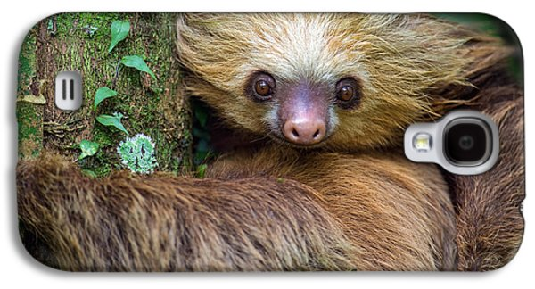 Two-toed Sloth Choloepus Didactylus Galaxy S4 Case by Panoramic Images