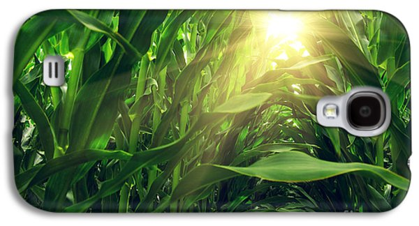 Corn Field Galaxy S4 Case by Carlos Caetano