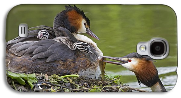 Great Crested Grebes Feeding Chick Galaxy S4 Case by Dickie Duckett