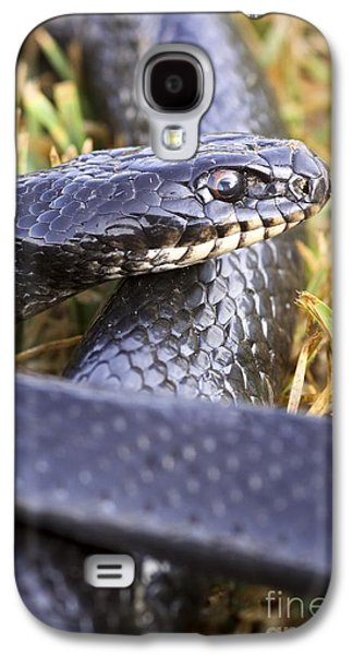 Wild Racers Galaxy S4 Case - Large Whipsnake Coluber Jugularis by PhotoStock-Israel