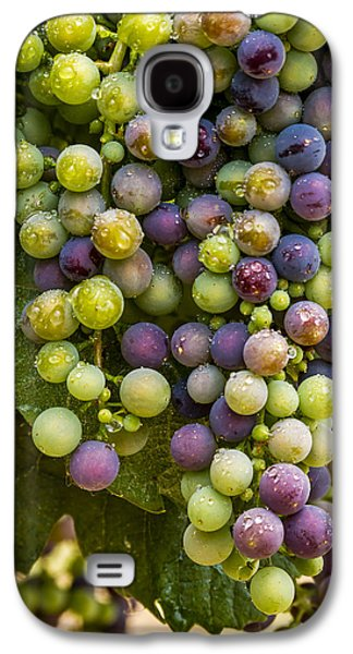 Red Wine Grapes Hanging On The Vine Galaxy S4 Case