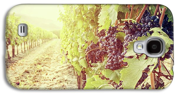 Ripe Wine Grapes On Vines In Tuscany Vineyard, Italy Galaxy S4 Case by Michal Bednarek