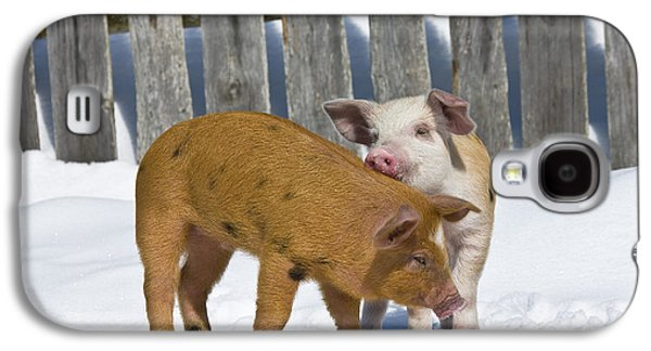 Two Piglets Playing Galaxy S4 Case by Jean-Louis Klein & Marie-Luce Hubert