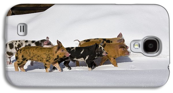 Piglets In The Snow Galaxy S4 Case by Jean-Louis Klein & Marie-Luce Hubert