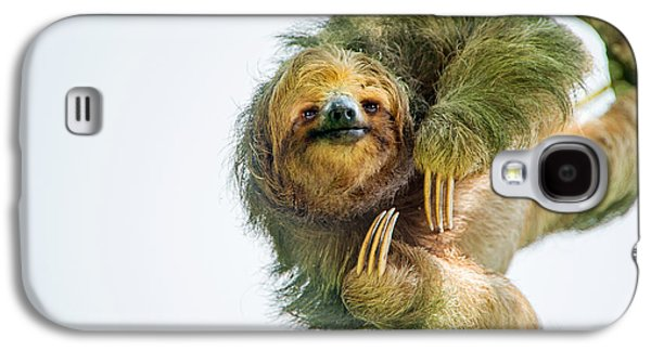 Three-toed Sloth Bradypus Tridactylus Galaxy S4 Case by Panoramic Images