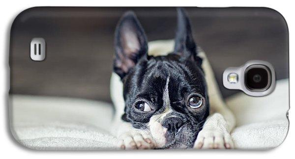 Boston Terrier Puppy Galaxy S4 Case by Nailia Schwarz