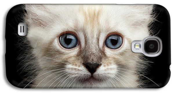 Cat Galaxy S4 Case - Cute American Curl Kitten With Twisted Ears Isolated Black Background by Sergey Taran