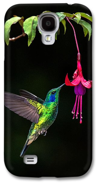 Green Violetear Colibri Thalassinus Galaxy S4 Case by Panoramic Images