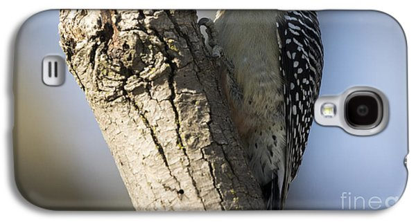 Red-bellied Woodpecker Galaxy S4 Case