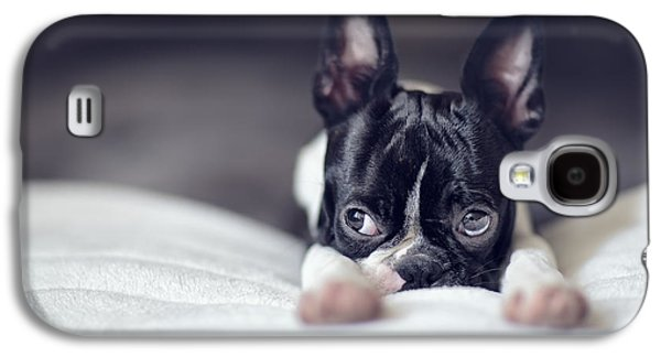 Boston Terrier Puppy Galaxy S4 Case