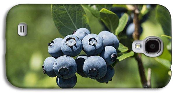 Blueberry Bush Galaxy S4 Case by John Greim