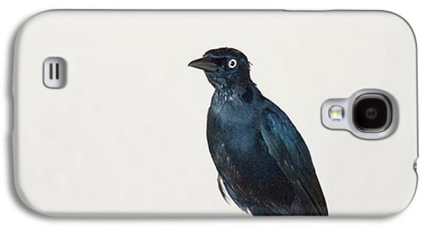 Galaxy S4 Case - A Carib Grackle (quiscalus Lugubris) On by John Edwards